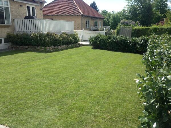 grass1_thumb